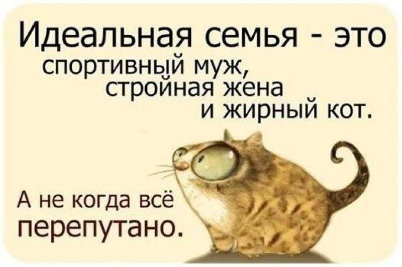 Статусы вк с котами