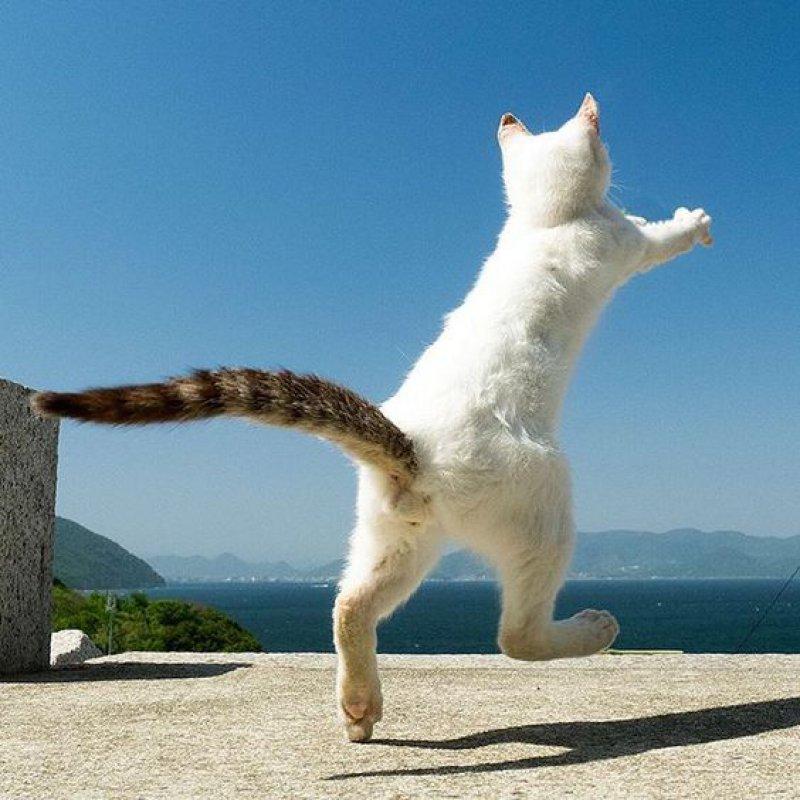 картинки с котами про отпуск много денег любви