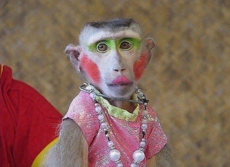 картинка с обезьяной накрасилась мужчины, которые