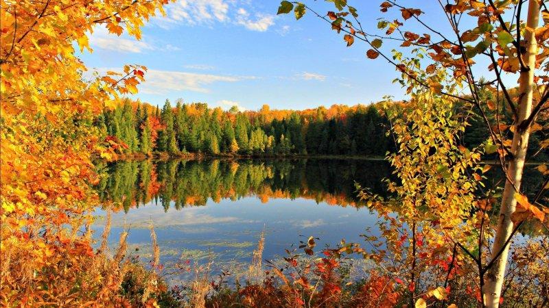 Картинки по запросу осень фото