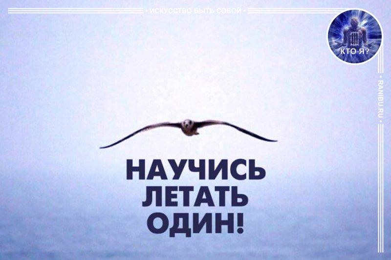 Демотиватор научись летать