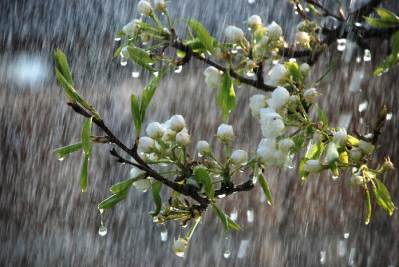 Картинки по запросу весенний дождь картинки