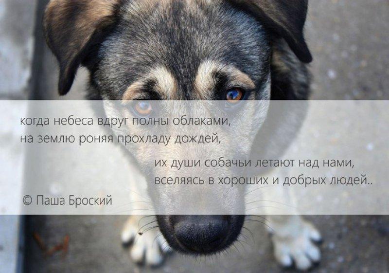 космическом картинки об утрате собаки хочу