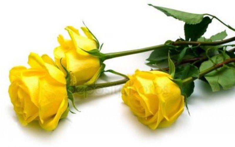 Желтые розы на память фото